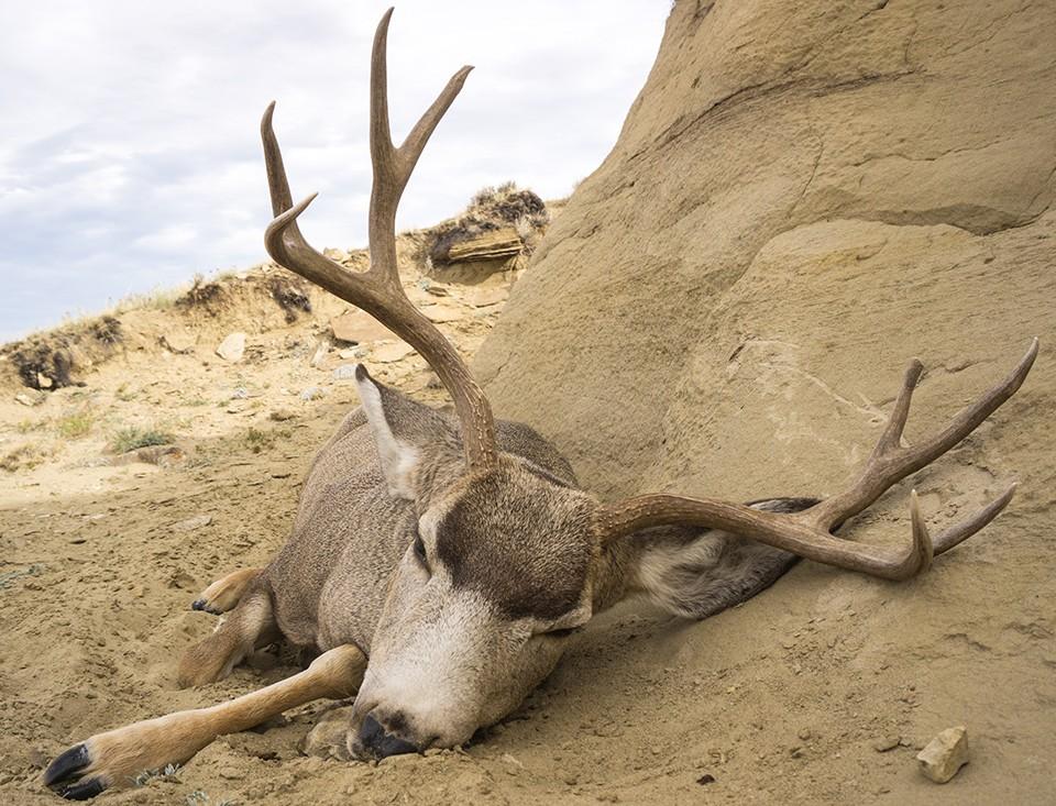 OTC Deer Hunting