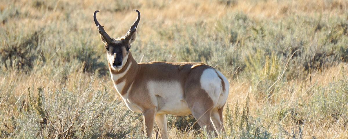 Arizona Hunt